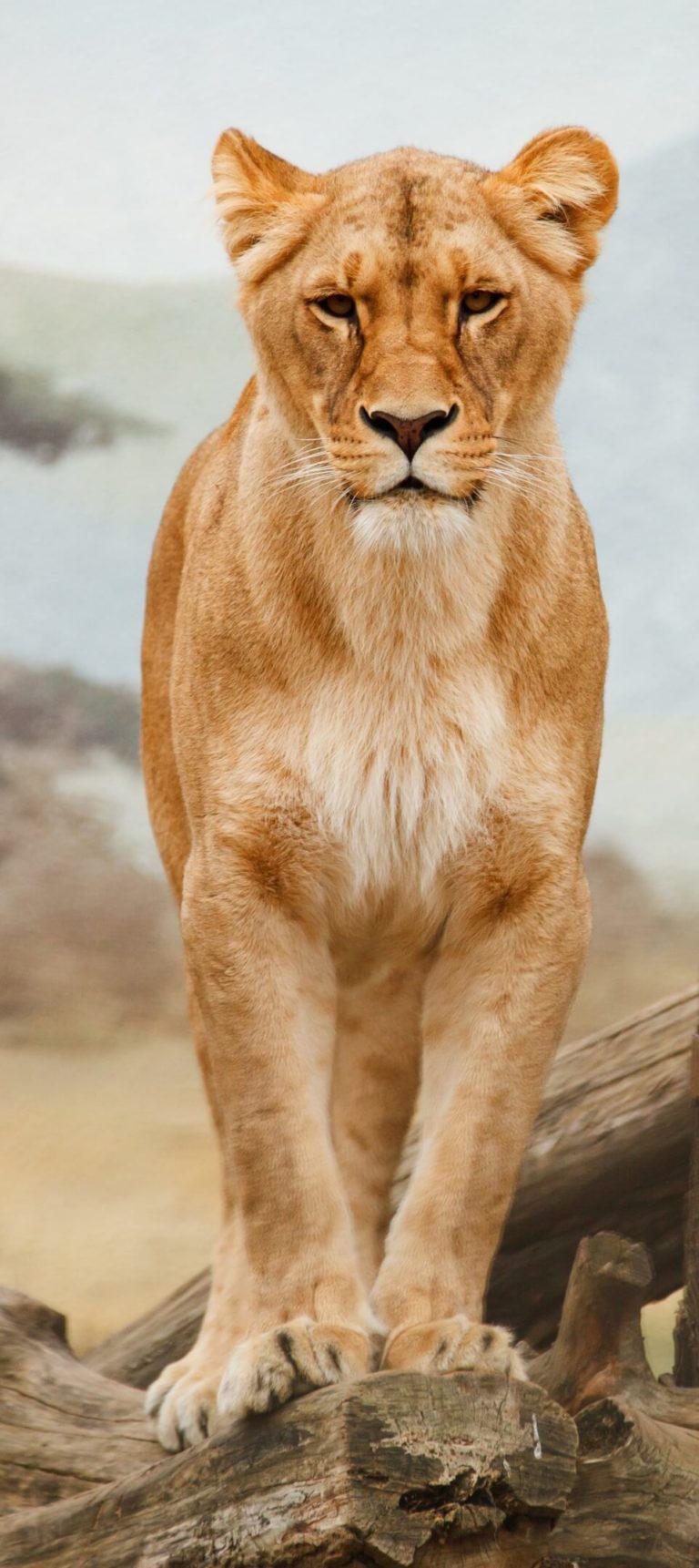 leeuwin zuid afrika